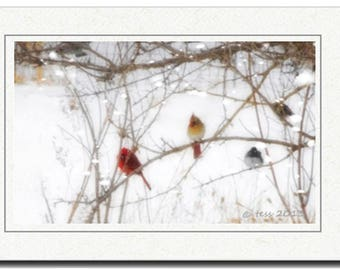 Cardinals Photography Print - Also Available As Photography Greeting Card - Winter Cardinals Photo