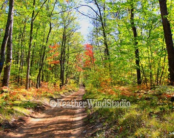 Landscape Photography | Forest Road | Northern Woods | Changing Colors | Autumn Fall Leaves | Dirt Trail | Woodland Scenery Art | Road Print