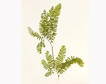 Fern Art Print, Fern Botanical Print, Rustic  Decor, Woodland Art, Forest Wall Decor, Nature Photography