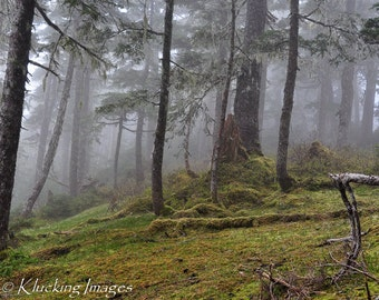 Dream Forest, Misty Woods, Rain Forest, Foggy Rain Forest