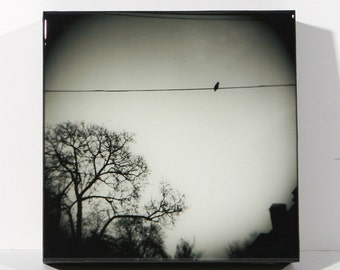 Bird on a Wire - 8x8 Resin-Coated Print