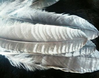 10 large wing feathers from a Muscovy duck.  Cruelty free feathers - chocolate ripple. Look like turkey feathers