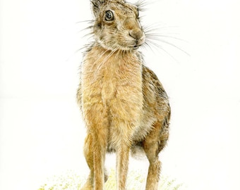 Hare Picture - A3 Limited Edition Print