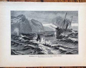 1900 WHALING in SIBERIA print original antique marine animal sea life ocean lithograph - whale harpooning