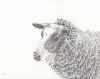 Original drawing of a brown coloured sheep