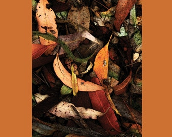 Eucalyptus Leaves  Blank Greeting Card Free Shipping Australia Wide.