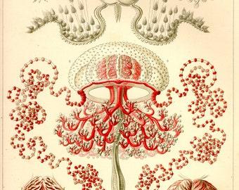 Botanical, Nature print, Botanical art, Nature life, Botanical decor, Nature decor, Nature illustration, 46