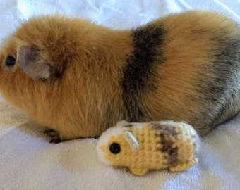 Customized Baby Guinea Pig