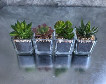 Faux desert plants, succulent plants, Wedding flowers, Home decor, faux succulents