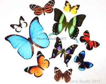 Realistic Paper Butterflies - Cut outs - Set of 10 paper butterfly cut outs - Blue morpho set