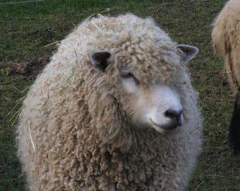 90 g Leicester Longwool Fleece
