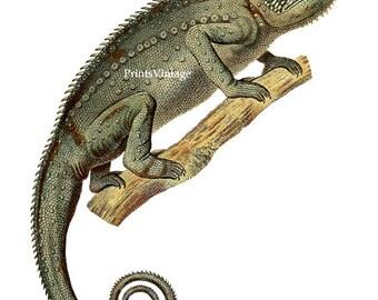 watercolor chameleon | etsy