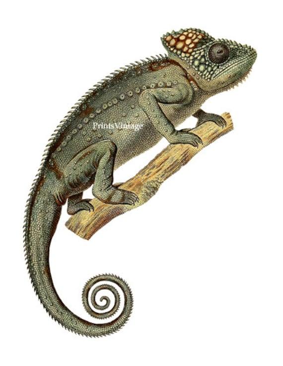chameleon clipart chameleon print animal clipart chameleon