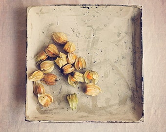 Cape Gooseberries, Little orange fruits in the paper thin shells, Fine art food photography, Kitchen wall art, Home Decor