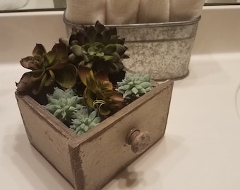 succulents on a drawer