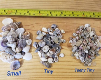 Multi Sizes Shell Mix Teeny Tiny Mini Small Seashells Supplies Crafts Art Home Decor Collections Jar Filler Jewelry Supply Beach Weddings