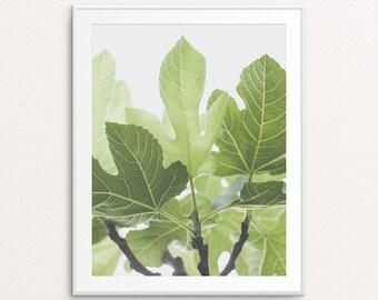 Fig Tree Photo - Fig Tree Print, Botanical Print, Botanical Photograph, Nature Photography, French Countryside, Green
