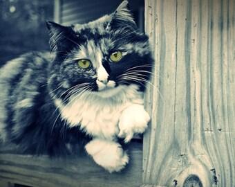 Cat Photo Green Eyed Cat Kitty Photo Black and White Photo Signed Art Print