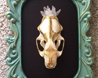 Skull Art - Mink Skull, Mounted