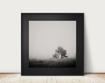 tree photograph winter photograph fog photograph black and white photography tree print nature photography winter print