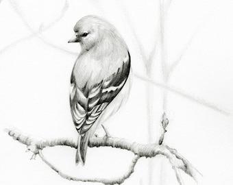 Bird Drawing Pencil Drawing of a Bird Art print Minimalist Bird Drawing Illustration Pencil Drawing of a Bird Print of my Original Drawing