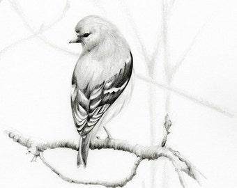 Bird Drawing Pencil Drawing Wildlife Kingdom Bird Art print Minimalist Giclee Art Print Wildlife Woodland Bird Pencil Drawing Wanderlust