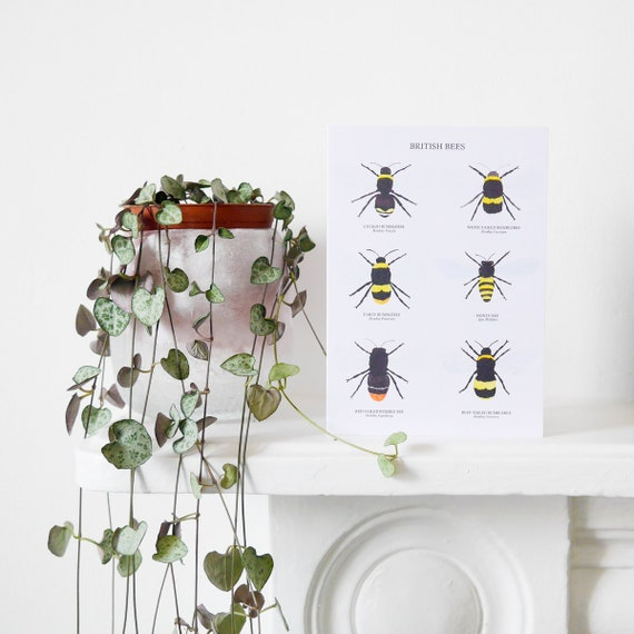 British bees card bee greetings card bee art print bee like this item m4hsunfo