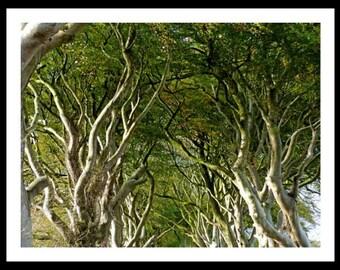 """Fotografía """"The Dark Hedges"""" Irlanda del Norte."""