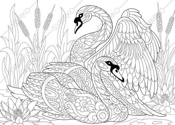 Swan Coloring Page Adult