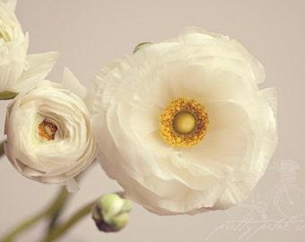 Fine Art Print, Ranunculus Flower Art, Ranunculus Photo, Macro Art, Flower Photo, Blooms, Botanical Print, Home Decor, Spring, Floral Print