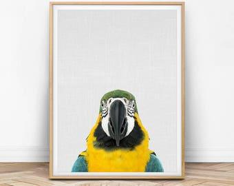 Parrot Print, Parrot Art, Parrot Printable, Parrot Photo, Macaw Print, Bird Decor, Bird Art, Bird Print, Bright Print, Colorful Decor