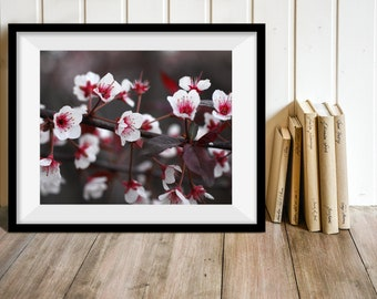 Crab Apple Blossoms, Flower Photography, Print