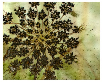 Dreamy Botanical Flower Wall Art Textured Large Print Wild Bloom