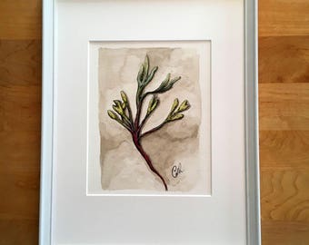Kelp - Original drawing with watercolor and pencil - 7 3/4 x 6