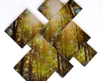 Forest Photography, Limited Edition, 'Forest, Peace by Piece', Image Transfer on Wood Panels by Patrick Lajoie, fractured, diagonal, trees