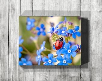 Ladybug Canvas Art, Canvas Ladybug Print, Blue Canvas Wall Art, Canvas Nature Print, Gallery Wrap Canvas, Canvas Print, Nature Photography