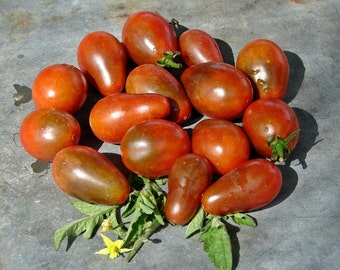 Chocolate Pear Tomato Heirloom Garden Seed Sweet Early Non-GMO Naturally Grown Open Pollinated 30+ seeds Gardening