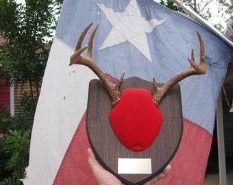 "Deer Antlers 9 points 11"" wide rack Texas wild game hunt antler hunting trophy Texan rustic decor for Texan Cabin Ranch retro Texana Lot R-1"