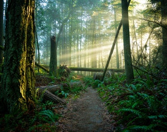Pacific Northwest, Forest Pictures, Forest Photos, Northwest Pictures, Home Art, Fine Art Photography | Forest Walk Bellingham, WA.
