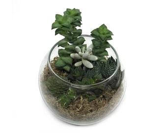 Succulent Terrarium - Made To Order