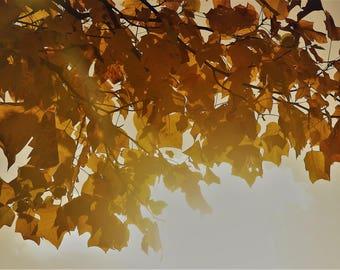 "Photo, photography, photo, photography, fine art, print, art, art, ""Autumn"""