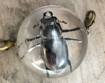 Real Male Stag Beetle Pendant with Leather Bracelet