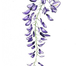 "Original Wisteria Flower Watercolor ""Mantra Flora"" Print"