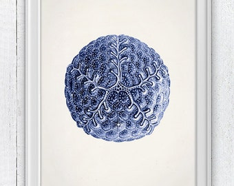 Jellyfish Cistoidea 04 in blue - Wall decor poster  , sea life print -Blue  natural mandala SAS108