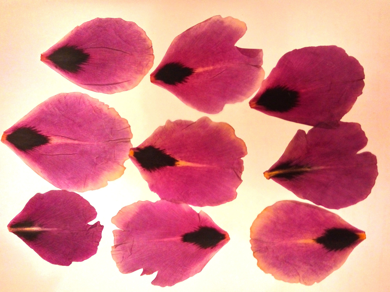 Pressed Flowers. Herbarium..For Oshibana, Cards, Scrapbooking, Decor ...