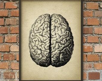 Brain Antique Anatomy Wall Art Poster #2
