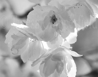 Black and White Photography, Raindrops on Blossoms, Fine Art Image, Soft Spring Flower, Gentle Wall Decor, Floral Art Print, 8 x 8 or Larger