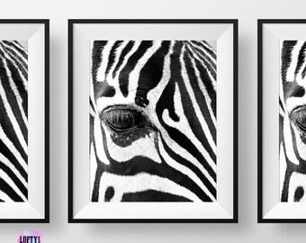 zebra print, Zebra Printable Art, zebra wall art, zebra art print, zebra pictures, zebra art, Zebra Photography, Zebra Photo,Safari Prints