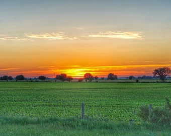 Field Sunset Canvas Print