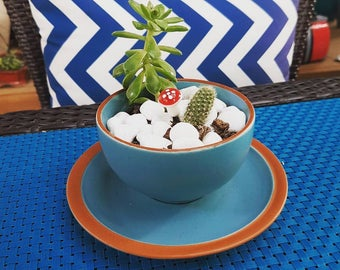 Large tea cup with succulent and cactus